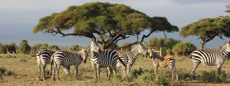 Gran tour de Sudáfrica