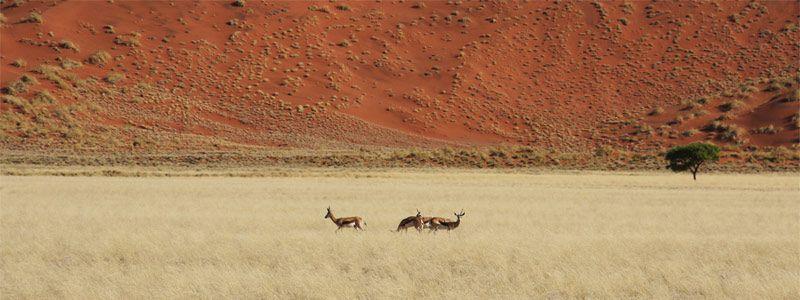 Maravillas de Namibia