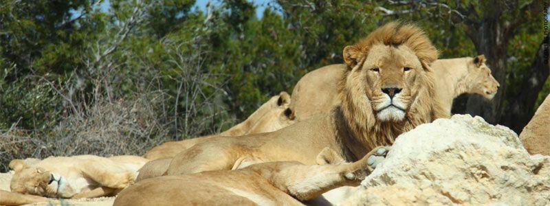 Escapada a la Reserva Africana Sigean