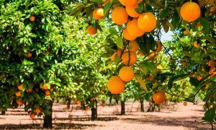 Escapada a la Fiesta de la Naranja