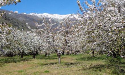 Valle del Jerte y Comarca de la Vera